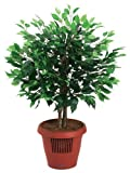 Amcor AM-70 Ficus Tree Air Purifier