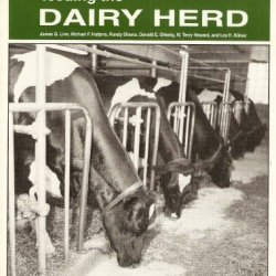Feeding The Dairy Herd