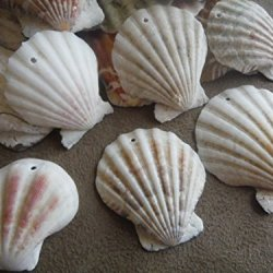 10 Pcs. Large Drilled Sea Shells Penadants - Measure 1 1/2 - 2 Inch - Boho - Surfer - Beach - Wire Wrapping