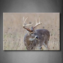 Whitetail Deer Buck In A Foggy Field Wall Art Painting The Picture Print On Canvas Animal Pictures For Home Decor Decoration Gift (Stretched By Wooden Frame,Ready To Hang)