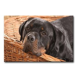 Wall Art Painting Rottweiler In The Basket Pictures Prints On Canvas Animal The Picture Decor Oil For Home Modern Decoration Print For Bedroom