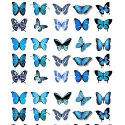 45X Blue Butterflies Edible Cake Toppers (Birthday Cupcake Topper By Eshack)