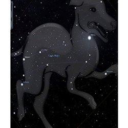 Sangu Little Horse Hard Back Shell Case / Cover For Ipad Mini