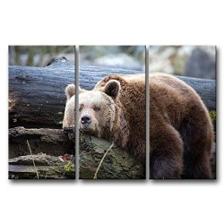 3 Panel Wall Art Painting Lazy Bear On The Tree Trunk Prints On Canvas The Picture Animal Pictures Oil For Home Modern Decoration Print Decor For Kitchen