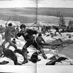 Seal Hunting Arctic Regions Boats Knives Hooks 1887