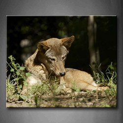 Wolf Sitting In The Grass In The Sun Wall Art Painting Pictures Print On Canvas Animal The Picture For Home Modern Decoration (Stretched By Wooden Frame,Ready To Hang)
