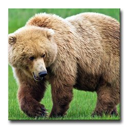 Brown Wall Art Painting Huge Brown Bear In The Grassland Pictures Prints On Canvas Animal The Picture Decor Oil For Home Modern Decoration Print