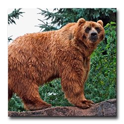 Wall Art Painting Brown Kodiak Bear Walking In Forest Pictures Prints On Canvas Animal The Picture Decor Oil For Home Modern Decoration Print