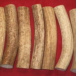 One Large Axis Deer Antler Section - Dog Chews / Knife Handles Crafts