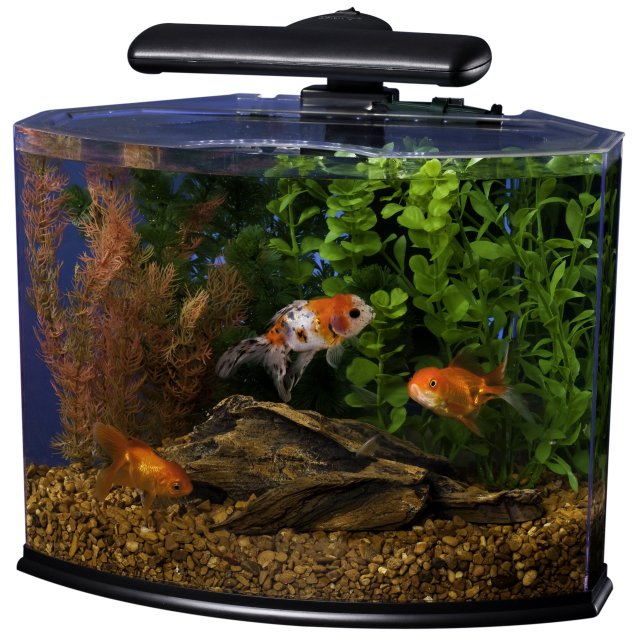 Betta Tanks