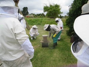 Honeychild - Beekeeping Theory in Rheenedal 1d