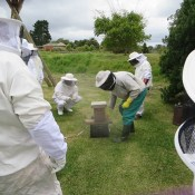 Honeychild - Beekeeping Theory in Rheenedal 1d