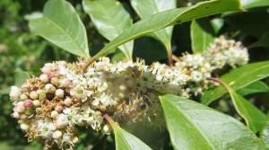 Honeychild - Beekeeping Theory in Rheenedal 1m