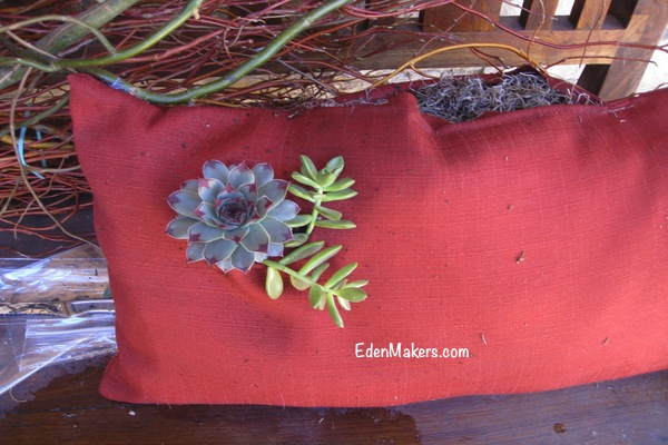 succulent-cutting-in-pillow-design-by-shirley-bovshow-edenmakers-blog