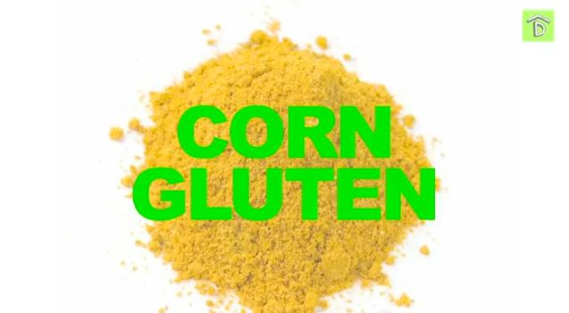 Corn_gluten_Organic_herbicide_kill_weeds