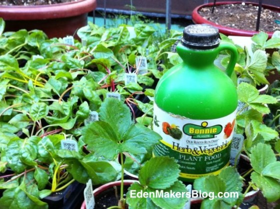 Bonnie-Plants-and-liquid-fertilizer-EdenMaker