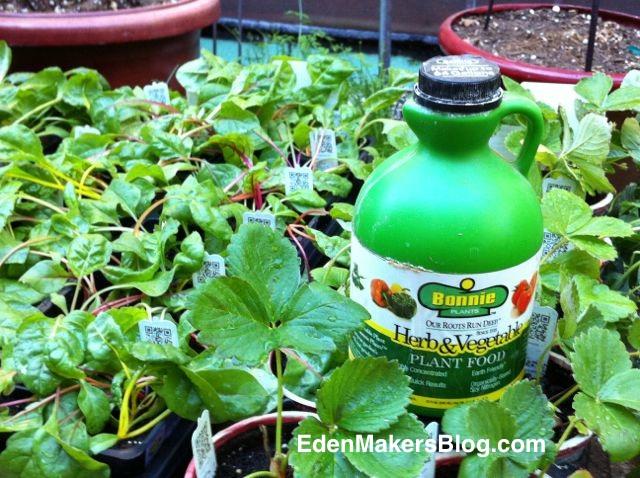 Bonnie-Plants-and-liquid-fertilizer-EdenMaker