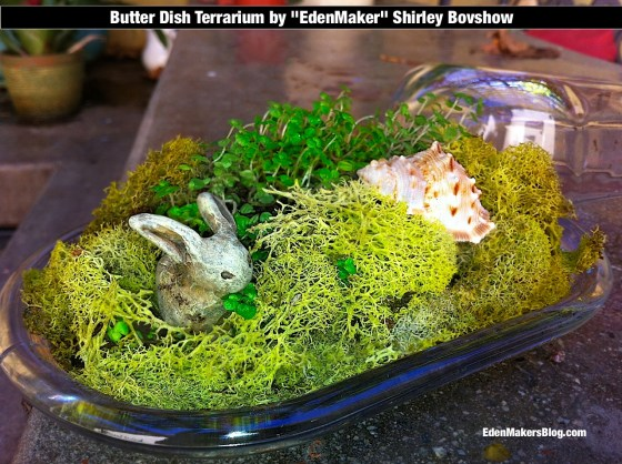 Butter dish terrarium with bunny and sea shell by Shirley Bovshow