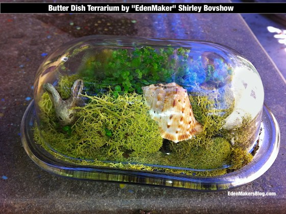 Closeup of  glass butter dish terrarium by Shirley Bovshow