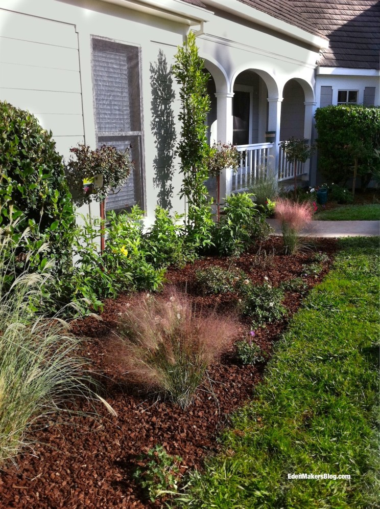 Regal-Mist-Muhlenbergia-Grass-Home-and-Family-Show-Yard