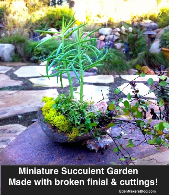 Broken-finial-made into miniature-garden-featuring succulent-cuttings by Shirley Bovshow  www.edenmakersblog