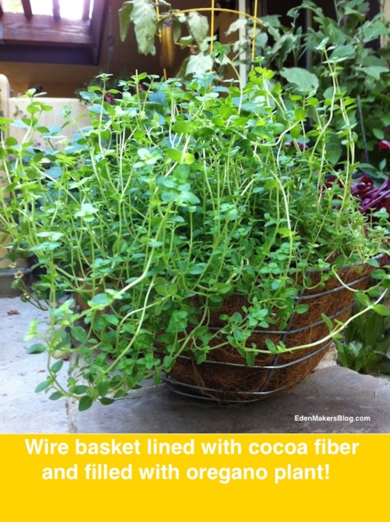 Herb-filled-metal-planter-coco-liner-edenamakersblog