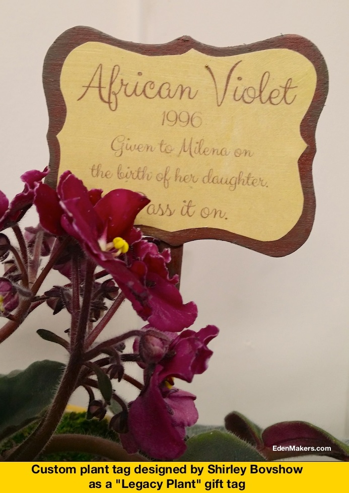 African-Violet-Plant-Tag-Legacy Plant-by-Shirley-Bovshow