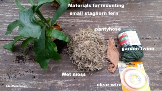 Supplies-for-staghorn-plant-mounting-displays-edenmakers