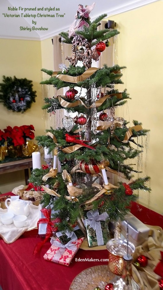 noble-fir-prunned-styled-victorian-tabletop-christmas-tree-by-shirley-bovshow-edenmakers-blog