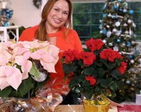 shirley-bovshow-garden-landscape-designer-expert-home-and-family-show-poinsettia-varieties-edenmakers-blog