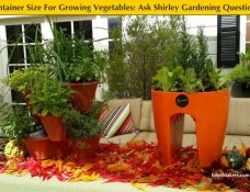 container sizes for growing vegetables small medium large explained edenmakers blog