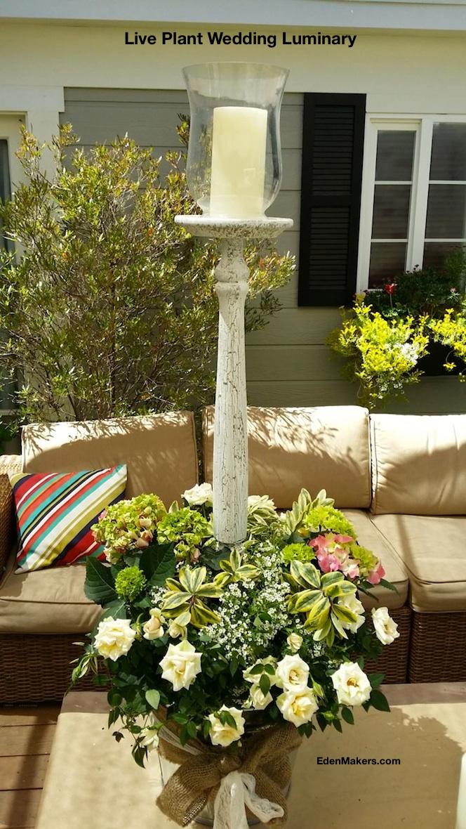live-plant-wedding-luminary-rustic-chic-white-candelabra-hydrangea-roses-edenmakers-blog