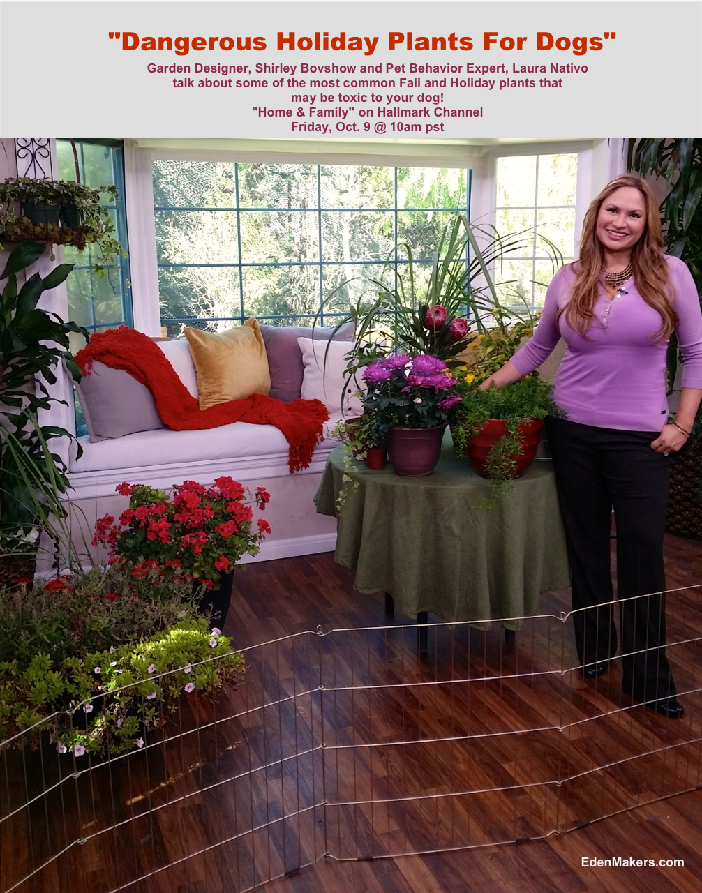 Common Poisonous Plant Brought Indoors For Winter: Pet Alert   Eden Makers  Blog By Shirley Bovshow