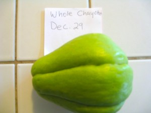 Chayote before planting