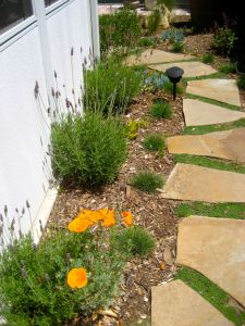 lavender against wall