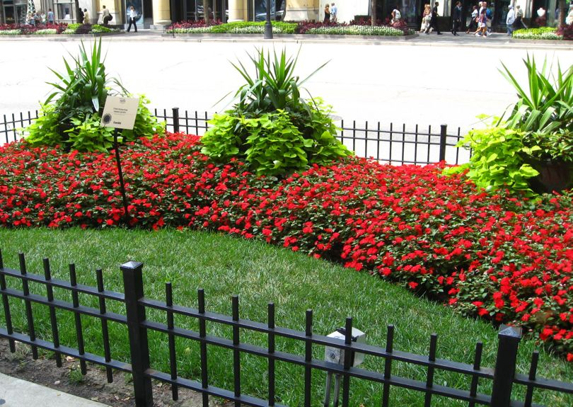 Chicagos sidewalk gardens are urban chic eden makers blog by small lawn red impatiens sweet potato vine in mightylinksfo