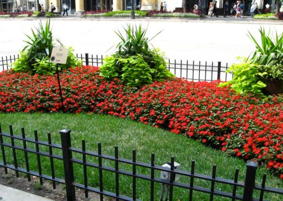 Small-lawn-red-impatiens-sweet-potato-vine-in-chicago