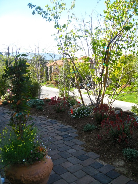 Mediterranean garden surrounds a patio