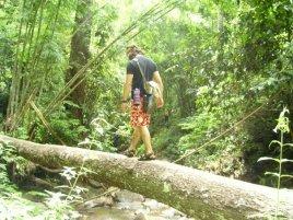 In the Thai Rainforst, 2007