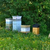 Bee School BUZZ (3 local options)