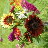 Backyard Flower Farming 101