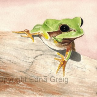 Hyla andersonii Pine Barrens Treefrog watercolor