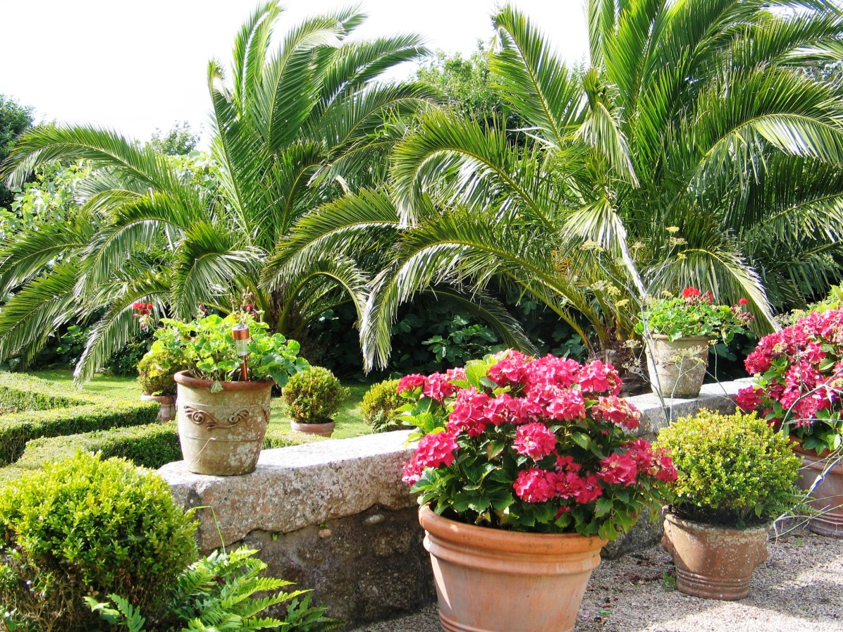 August in a coastal garden for The terrace top date