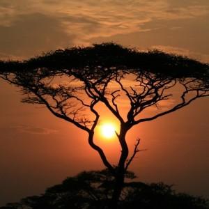 Tanzania Awaits