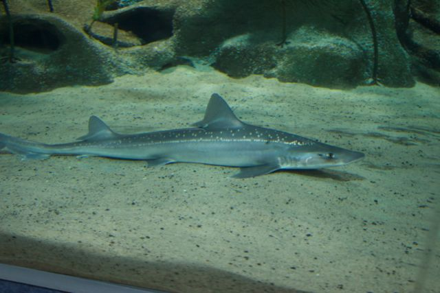 New Zealand National Aquarium: Learning about land and sea