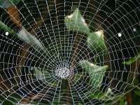 cobweb-197666_1280