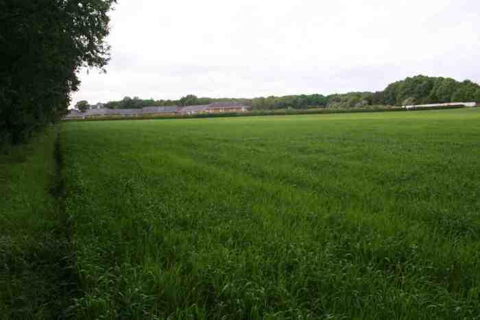 allotment field