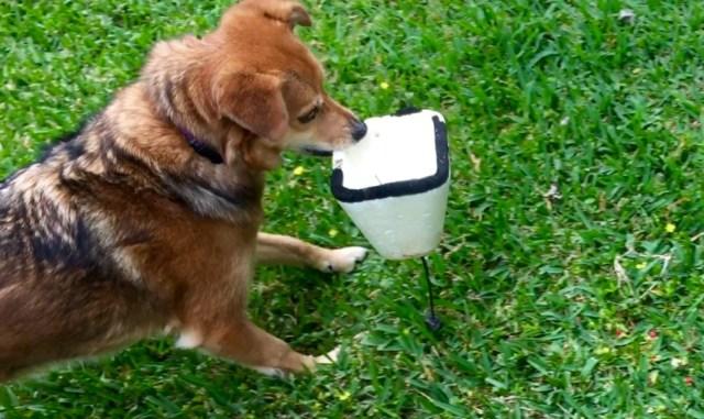 Dog body language study starring Summer