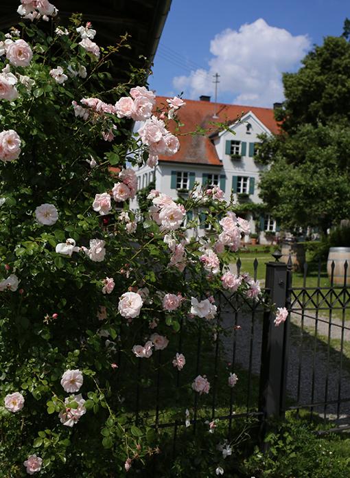 Thalhausen, Spaziergang, Weilachmühle