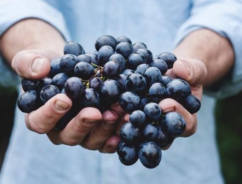 blaubeeren-hände-essen-food-religion-ernährung-gedanken-blau